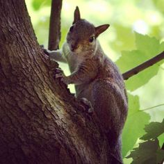 So I went out to Oakland Nature Preserve today and there was all kinds of wildlife out and about #oaklandnaturepreserve #orlando #florida #nature #outdoors #squirrel #animals #hiking #wildlife #instagood