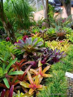 Browse landscape pictures, discover landscaping ideas and get tips from landscape design for creating your dream front yard landscaping or backyard landscaping ideas. Tropical Garden Design, Tropical Backyard, Tropical Landscaping, Tropical Plants, Front Yard Landscaping, Backyard Landscaping, Landscaping Ideas, Backyard Ideas, Tropical Gardens