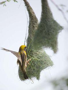 bird nests photos - Bing Images