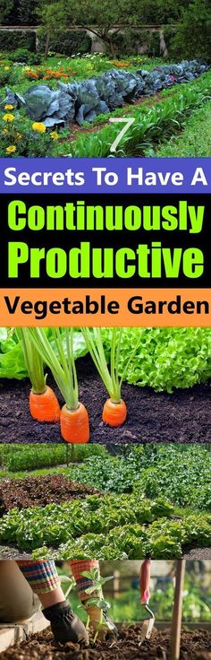 Secrets To Have A Continuously Productive Vegetable Garden Don't you want a garden that will not only produce a bountiful harvest of fresh vegetables but also produce them continuously?Don't you want a garden that will not only produce a bountiful harvest Garden Types, Veg Garden, Fruit Garden, Edible Garden, Lawn And Garden, Garden Plants, Vegetable Gardening, Terrace Garden, Garden Web