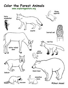 Forest Animals Coloring Page -- Exploring Nature Educational Resource