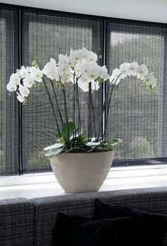 Witte orchidee in strak interieur. Dat bloemen en planten ook prima passen in…