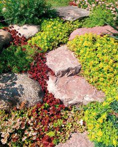Pflanzenarten mit vibranten Farben für den Steingarten