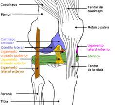 Ligamentos rodilla