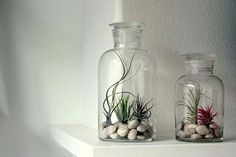Airplants in glass bottles - could use my beach stones from Tasmania Air Plant Display, Plant Decor, Ikebana, Air Plants, Indoor Plants, Bottle Terrarium, Airplant Terrarium, Bleu Pastel, Home Design Decor