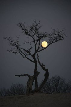 Feels like branch of tree is embracing the moon. 21 Breathtaking Images Of Moon That Will Make You Think If It's Real Or Not Sun Moon, Stars And Moon, Dark Moon, Foto Poster, Shoot The Moon, Moon Photography, Photography Tips, Good Night Moon, Beautiful Moon