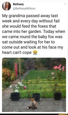 A grandma as wholesome as this family of foxes - Humor Photo - Humor images - A grandma as wholesome as this family of foxes The post A grandma as wholesome as this family of foxes appeared first on Gag Dad. Sad Love Stories, Sweet Stories, Cute Stories, Stories That Will Make You Cry, Coming Out Stories, Cute Funny Animals, Cute Baby Animals, Funny Cute, Hilarious