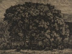 """Big Willows"", 1946, Luigi Lucioni, American (1900-1988), etching on paper, 10 1/8 x 13 5/8 in. Museum purchase with funds from the Benefactors Fund, 1979. 1979.2568"