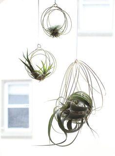 Petit Tillandsia ornements ornements de plante par elainebjewelry