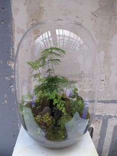Grow Little is based in Paris. The terrariums are made in hand blown glass vessels of various sizes, each is an original, hand made art piece with a unique miniature landscape design bringing nature's poetry into the home.