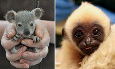 Livro compila fotos de filhotes exóticos nascidos em zoológicos