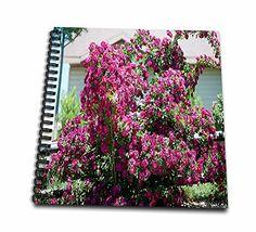 Jos Fauxtographee Realistic - A Beautiful Pink Climbing R... http://www.amazon.com/dp/B017LNX546/ref=cm_sw_r_pi_dp_-VHnxb1A9BW6V