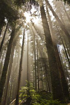 umcanyounottho:  nature/positivity blog