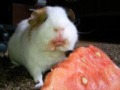 What?? I like da' watermelon...