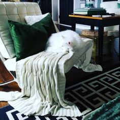 and this fur-baby, Sephora, LOVES to snuggle on a cozy, chunky knit throw during the chilly, winter Carolina days & nights 💚💚💚 Moving To North Carolina, Chunky Knit Throw, Knitted Throws, Winter Day, Snuggles, Vintage Shops, Sephora, Fur Babies, Cozy