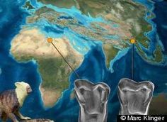 """Afasian: """"Primate Fossil May Suggest Human Ancestors Originated In Asia, Not Africa"""" --  Remember land masses millions of years ago was connected.  Look at the faces of some African tribes...Possibly environment drove movement?"""