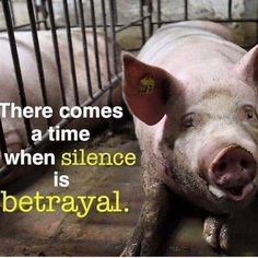 there comes a time when silence is betrayal - why finance cruelty #vegan