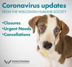 This example from Wisconsin Humane Society lays out all the important updates for followers in one place -- be sure this kind of info makes it on to every platform you use, including your website, as people access information differently Marketing Communications, Humane Society, Wisconsin, Platform, Website, People, Animals, Animales, Animaux