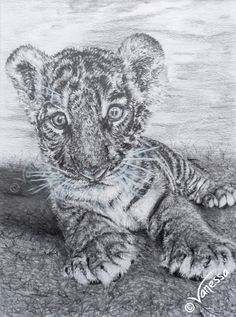 """""""FLUKE"""" Original pencil drawing of tiger cub by wildlife artist Vanessa Grundy Available to buy at http://vlgstudios.bigcartel.com/ Completed in January of 2016 using pencil and a touch of acrylic paints, it is an adaptation of an original photograph taken by Vanessa of a tiger cub named Fluke, one of the babies she looked after while she worked at Kanchanaburi Safari Park & Rescue Centre, Thailand, in 2014."""