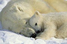 Photograph - A Polar