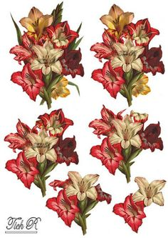FLOWERS - Margaret Elkin - Picasa Web Albums
