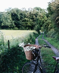 Bike. Flowers