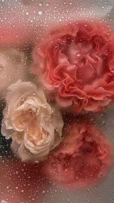 Floral Wallpaper Phone, Wallpaper Nature Flowers, Iphone Wallpaper Vsco, Flower Background Wallpaper, Pastel Wallpaper, Cute Wallpaper Backgrounds, Flower Backgrounds, Pretty Wallpapers, Aesthetic Iphone Wallpaper