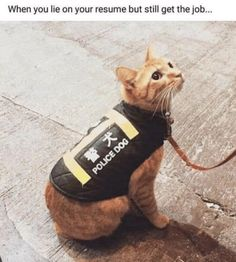 Cats Out Of The Bag With Delightful Caturday Memes Memes) - World's largest collection of cat memes and other animals Love Memes Funny, Funny Friday Memes, Funny Captions, Funny Stuff, Monday Memes, 9gag Funny, Crazy Funny, Random Stuff, Memes For Him