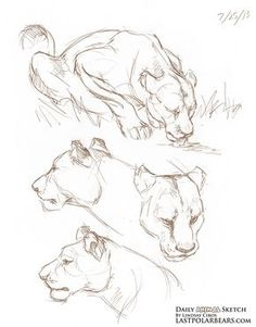 Daily animal sketch lioness the last of the polar bears animal bears daily lioness polar sketch part ii of my new penguin series part i btw every penguin took my about 2 min catabout btw cat every min part penguin series Cute Animal Drawings, Animal Sketches, Cool Drawings, Drawing Sketches, Drawing Ideas, Demon Drawings, Drawing Step, Drawing Animals, Lion Sketch