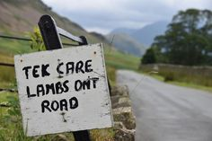 Indeed - lovely Herdwick ones! - #sheep #cumbria #lambs #holiday #summerholiday #lakedistrict