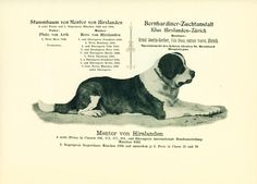 1897 Saint Bernard Dog Print named Swiss St Bernard