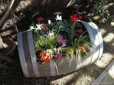 Моя любимая дача|Сад, огород, цветы