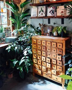 Lots of jungle goodness tucked away in this shady tropical corner. Hope everyone is keeping cool today!