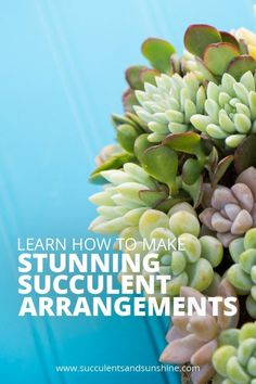 Learn how to make stunning succulent arrangements for your big events or holiday parties.