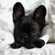 bed hog.