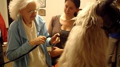 "DoveLewis-certified therapy llama, ""Smokey"" paid a visit to Chestnut Lane Assisted Living for the Deaf and Deaf-Blind and had this amazing interaction with o. Assisted Living, Llamas, Blinds, Therapy, Activities, Animals, Animaux, Jalousies, Blind"