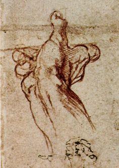 anatomy by Michelangelo ---.