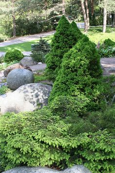 Birds nest spruce and box woods Modern Landscape Design, Modern Landscaping, Front Yard Landscaping, Small Gardens, Outdoor Gardens, Garden Gazebo, Most Beautiful Gardens, Summer Garden, Shade Garden