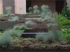 roof garden, green r
