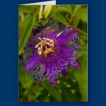 Lilikoi or passion flower card