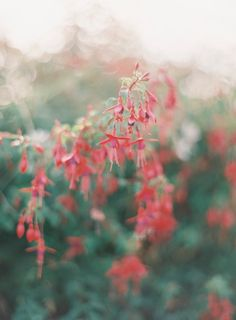 fuchsia | colorful | jen huang photo