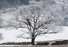 Winter snow scape