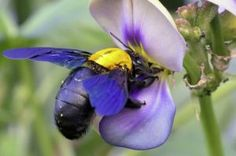 Welcome to My World - Bumble Bees - Honey Bees - Honey - Endangered Species - Human Survival - Alexis Unlimited