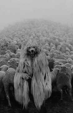Wolf in Sheep's Clothing Arte Horror, Horror Art, Creepy Art, Scary, Art Sinistre, Art Noir, Werewolf Art, Dark Photography, Macabre
