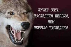 Russian Jokes, Wolf Quotes, Ukulele Chords, Mood Pics, I Don T Know, Custom Clothes, Funny Memes, Lol, Motivation