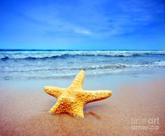 Starfish On A Beach Photograph by Michal Bednarek - Starfish On A Beach Fine Art Prints and Posters for Sale