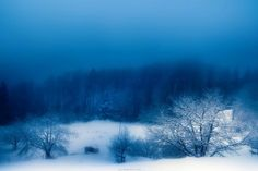 landscapes, winter, snow, trees, fog, blue sky wallpapers