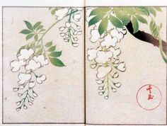 Title:其玉画譜 9 藤 Book of pictures 9 Wisteria  Artist:中野其玉 Nakano Kigyoku