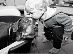 Tendresse pour un vieux chien