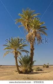 3 joined arabic palm trees - Google Search